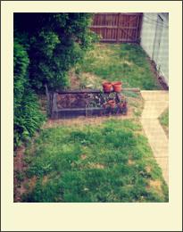 backyard_garden